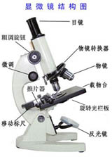 学生显微镜图片