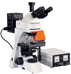 反射荧光显微镜图片