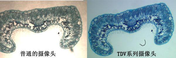 数码显微镜摄像头所拍效果图