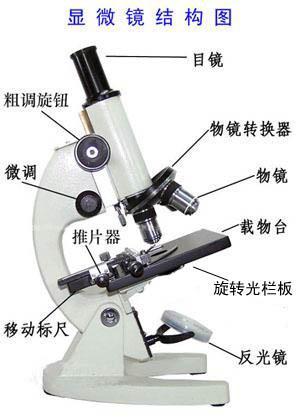 显微镜结构图