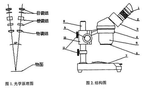 體視顯微鏡的原理與體視顯微鏡的結構圖